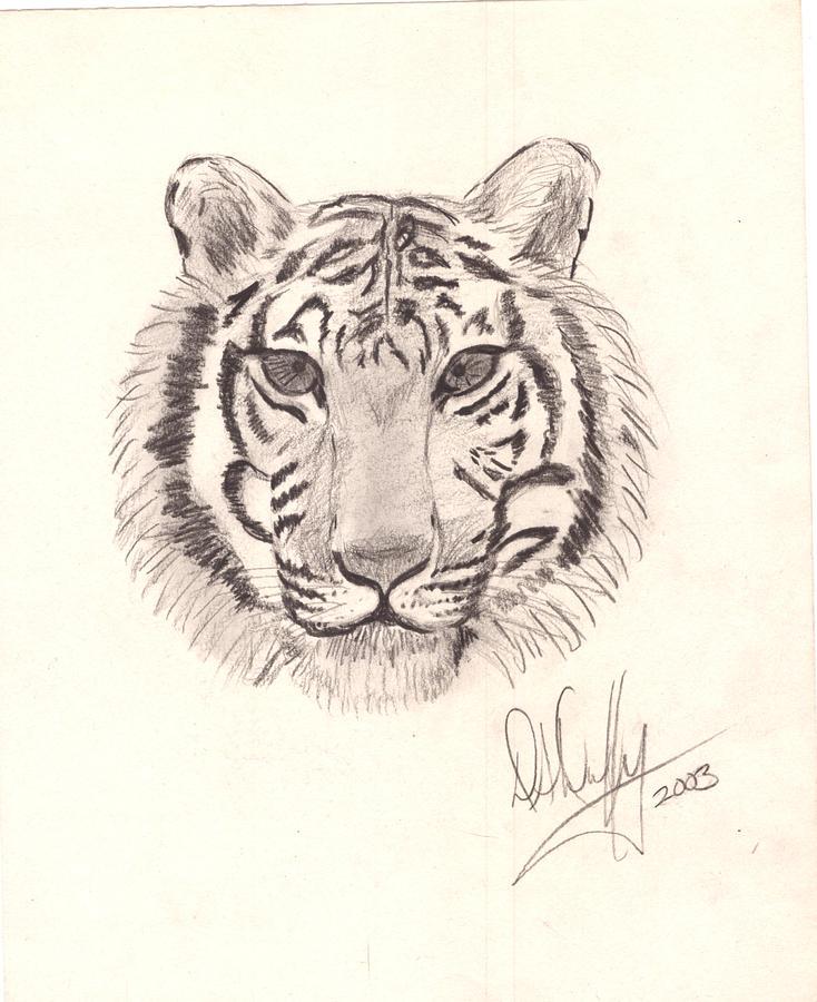 Tiger head drawing - photo#7