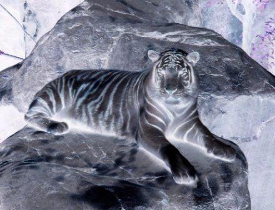 Tiger In The Night  Digital Art