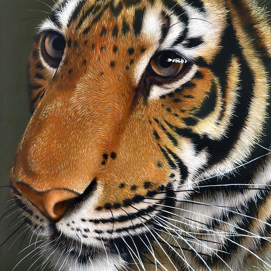 Tiger Painting  - Tiger Fine Art Print