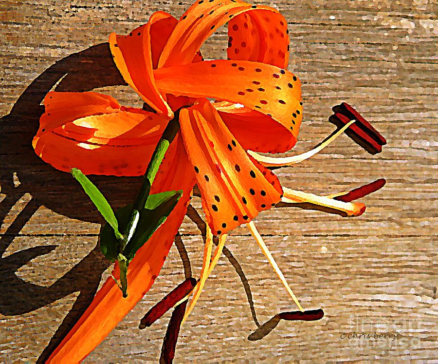 Tiger Lily With Watercolor  Photograph