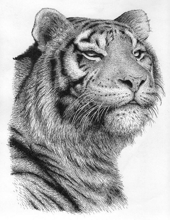 Tiger By Rens Ink