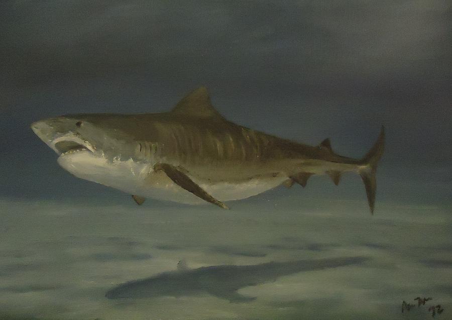 Tiger Shark Painting
