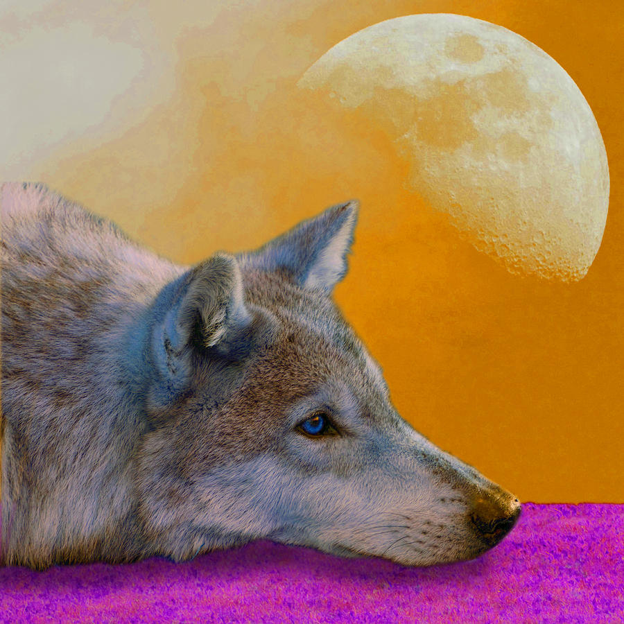 Timber Wolf Under The Moon Photograph  - Timber Wolf Under The Moon Fine Art Print