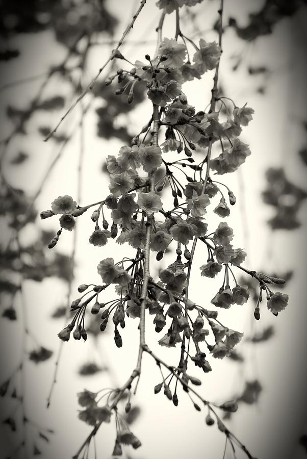 Tiny Buds And Blooms Photograph  - Tiny Buds And Blooms Fine Art Print