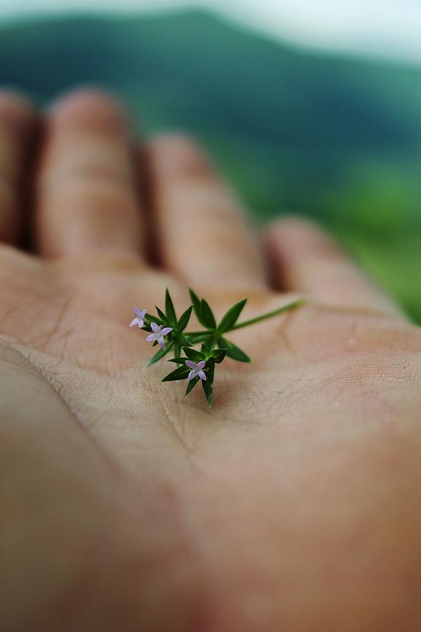 Tiny Flowers Photograph  - Tiny Flowers Fine Art Print