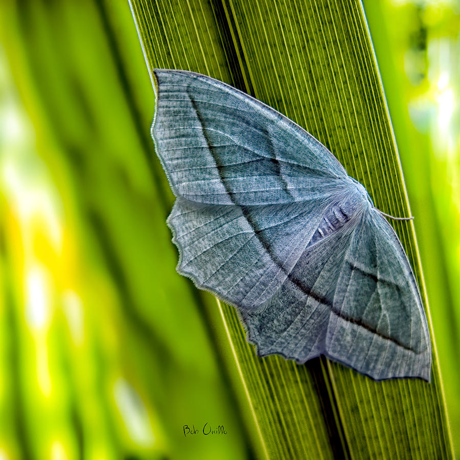 Tiny Moth On A Blade Of Grass Photograph  - Tiny Moth On A Blade Of Grass Fine Art Print