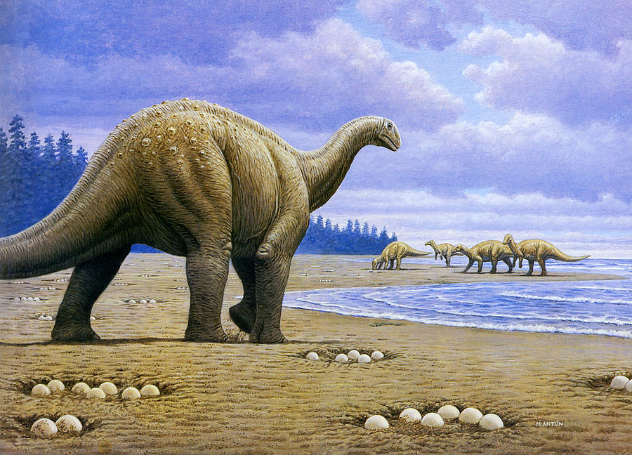 Titanosaur is a photograph by Mauricio Anton which was uploaded on May ...