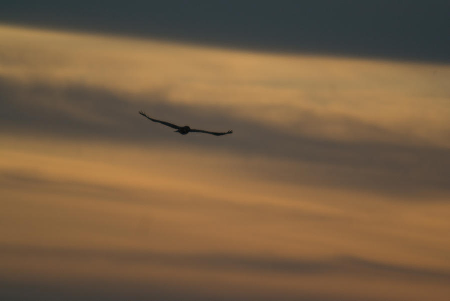 To Soar - Free Photograph
