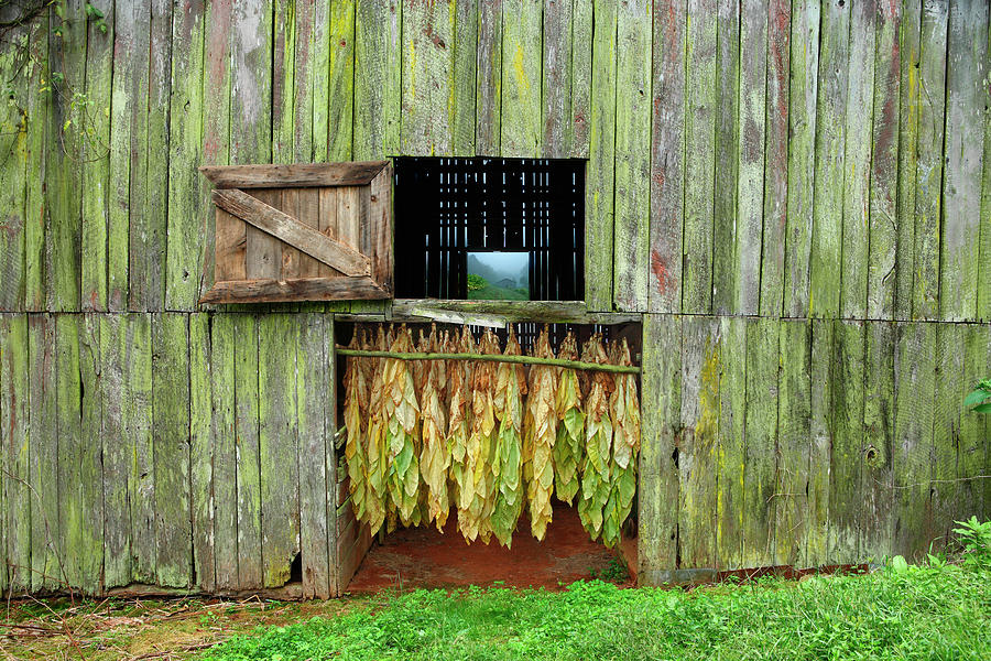 Tobacco Barn Photograph