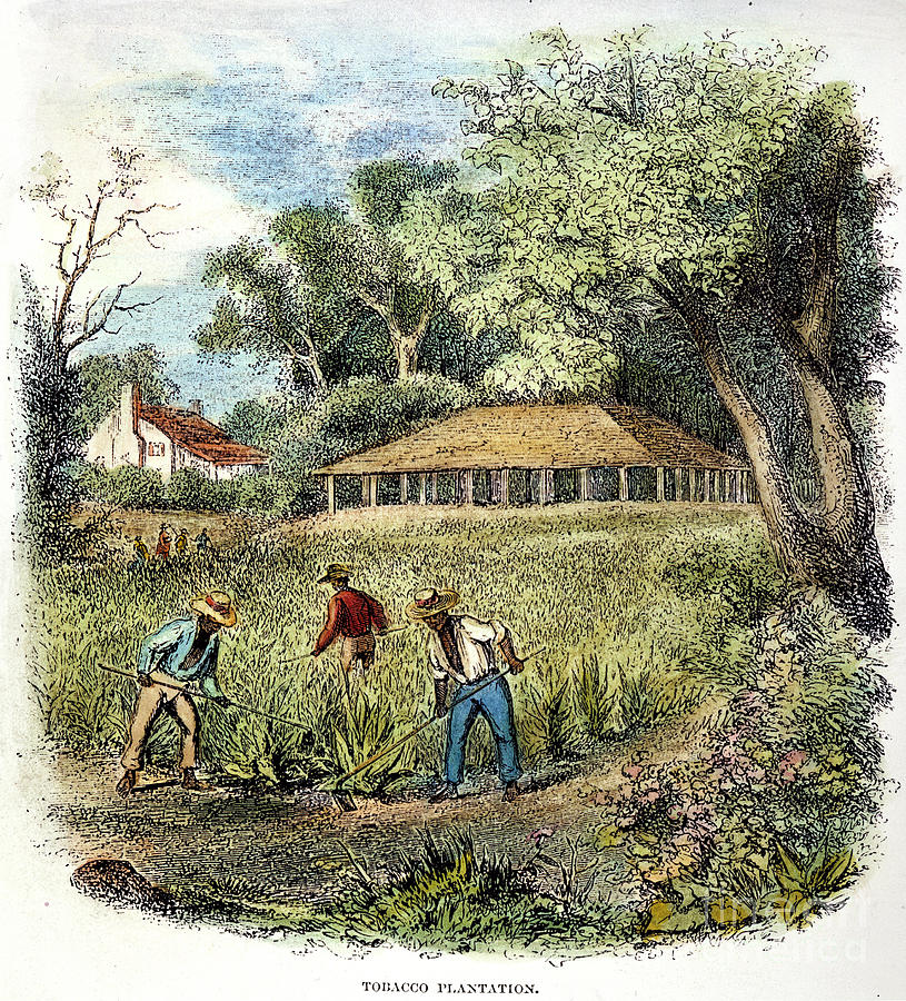 http://images.fineartamerica.com/images-medium-large/tobacco-plantation-granger.jpg
