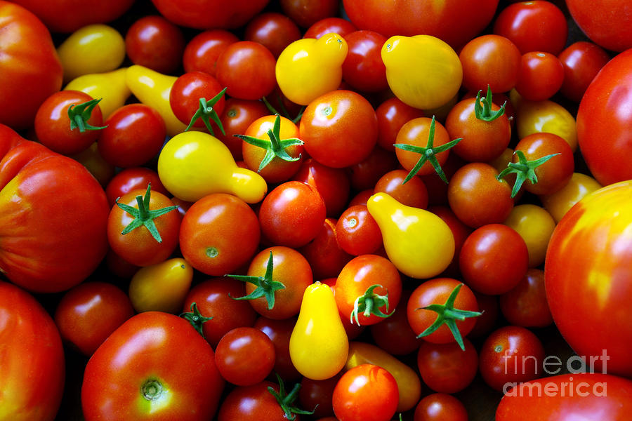 Tomatoes Background Photograph