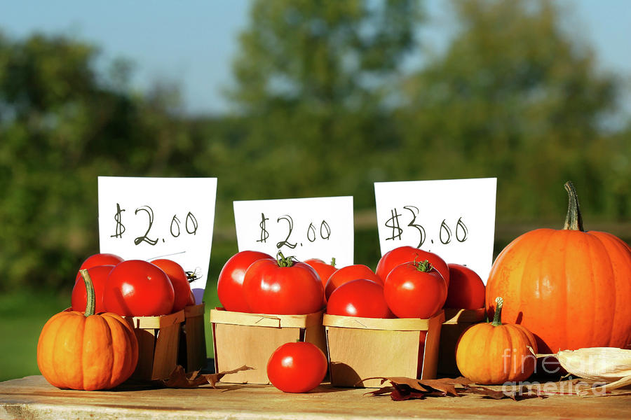 Tomatoes For Sale Photograph