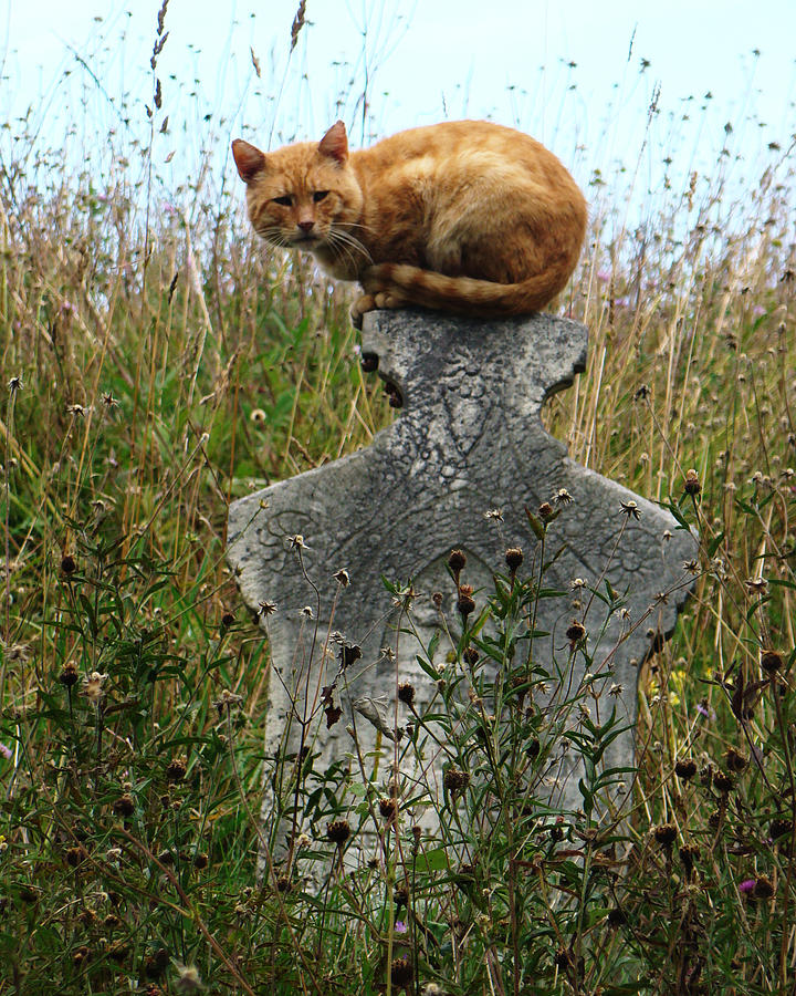 Tombstone Cat Photograph