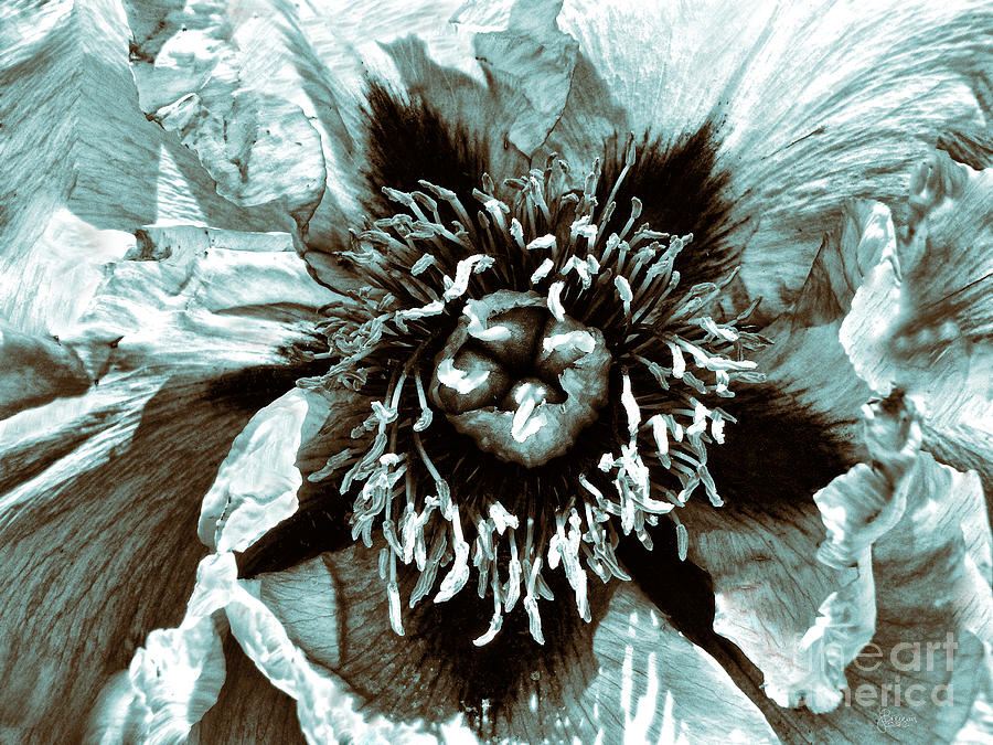 Flower Photograph - Toned Floral Print by Jeff Breiman