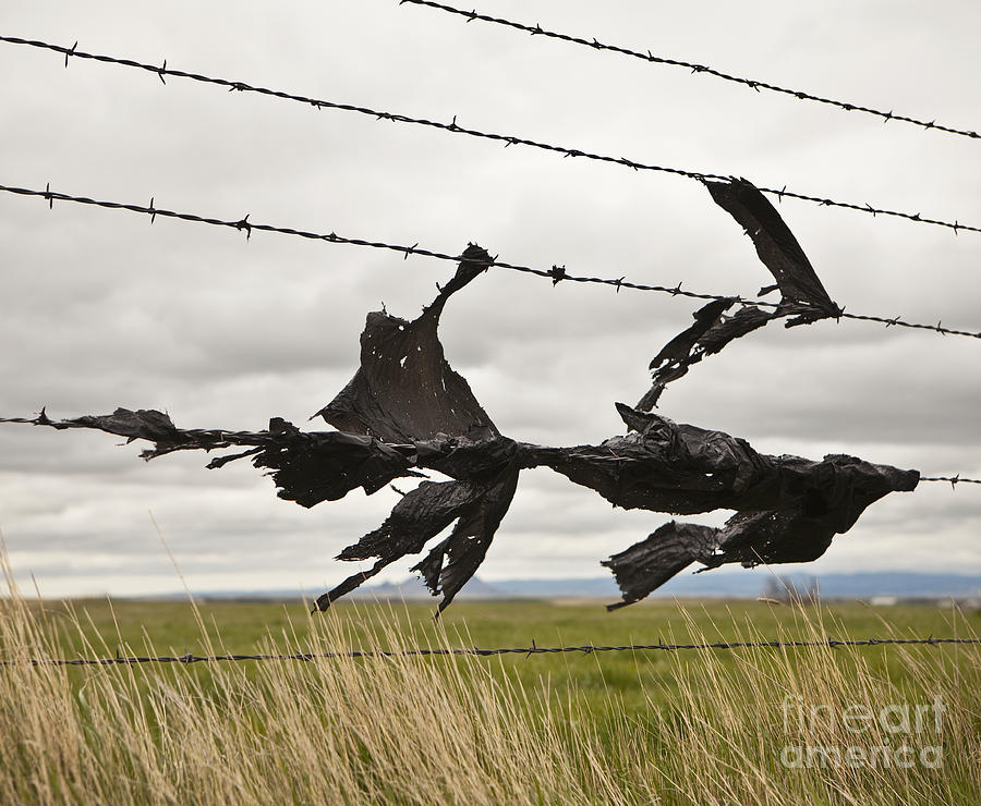 Torn Bags On A Barbed Wire Fence Photograph