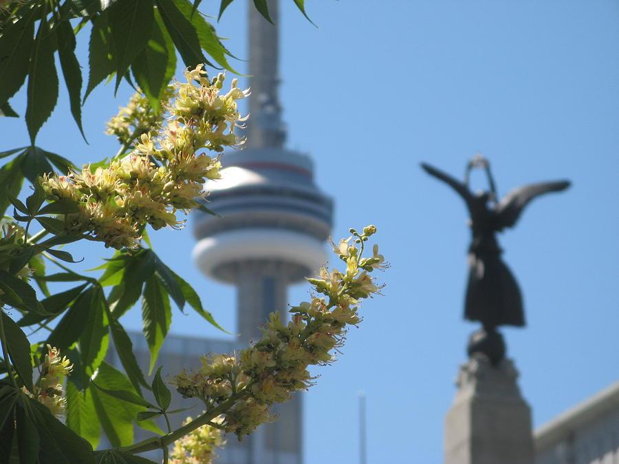 Spring Photograph - Toronto Spring by Alfred Ng