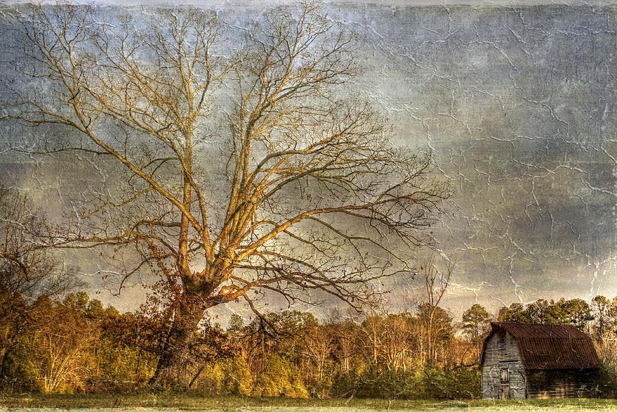 Towering Oak Barn Photograph