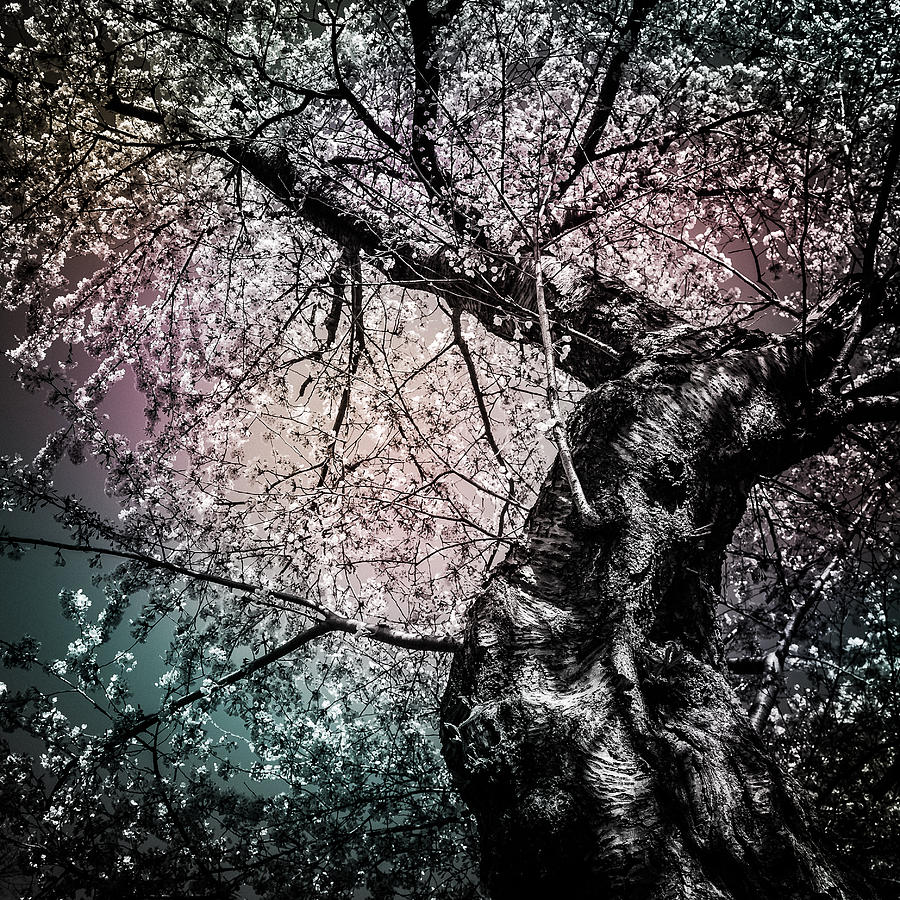 Tracing The Constellations Photograph  - Tracing The Constellations Fine Art Print