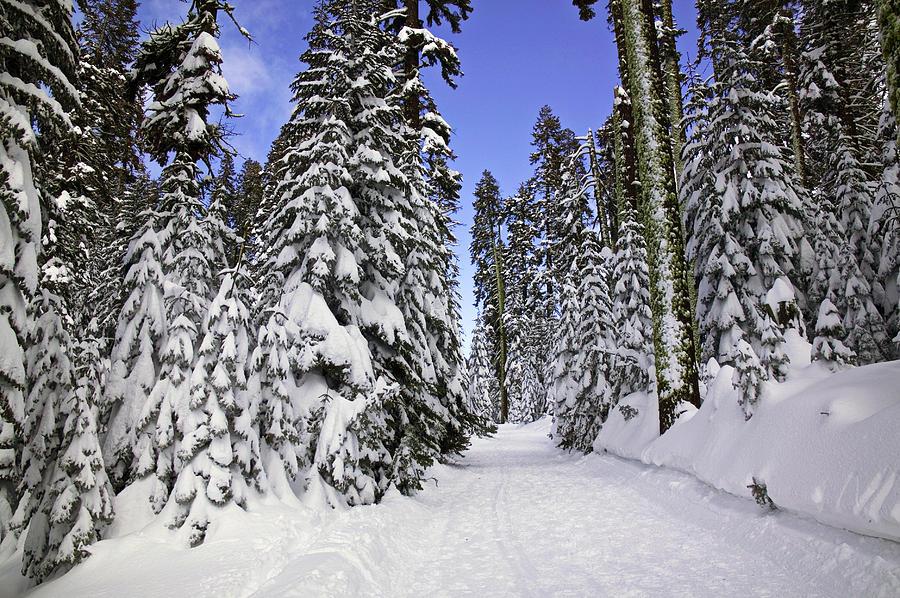 Trail Through Trees Photograph