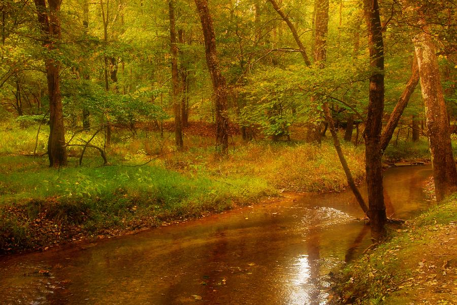 Tranquility Stream - Allaire State Park Photograph