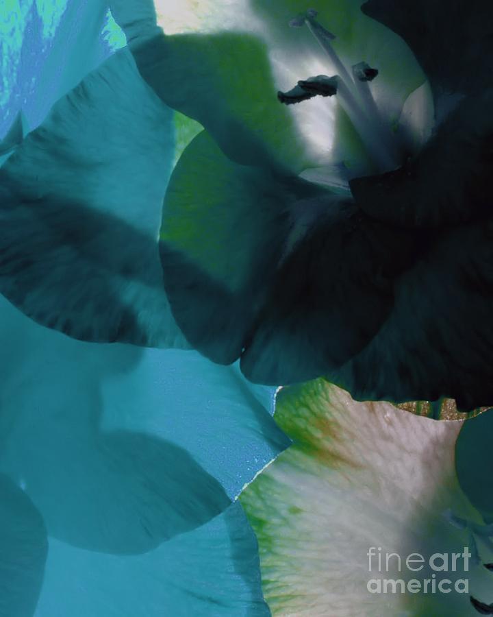 Translucent Petals  Photograph