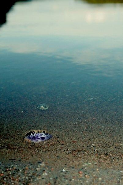 Water Photograph - Treasure At Shore by Derya  Aktas