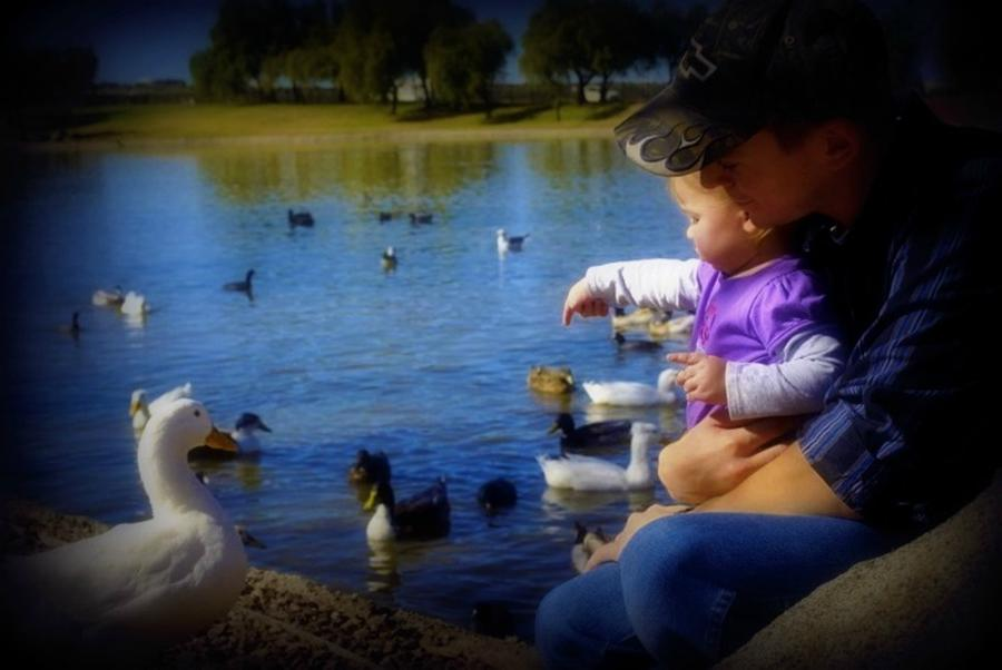 Duck Photograph - Treasure The Memories by Amanda Eberly-Kudamik