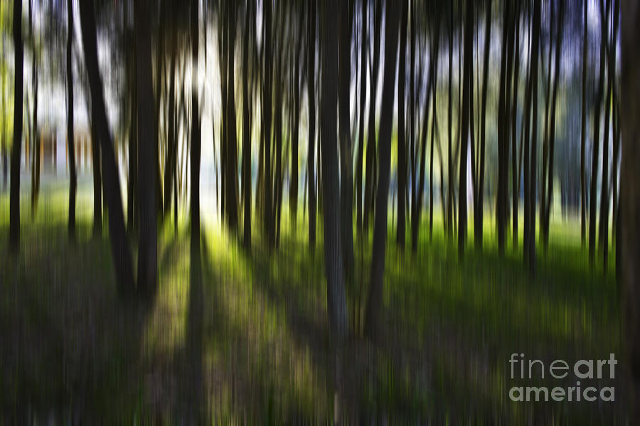 Tree Abstract Photograph  - Tree Abstract Fine Art Print