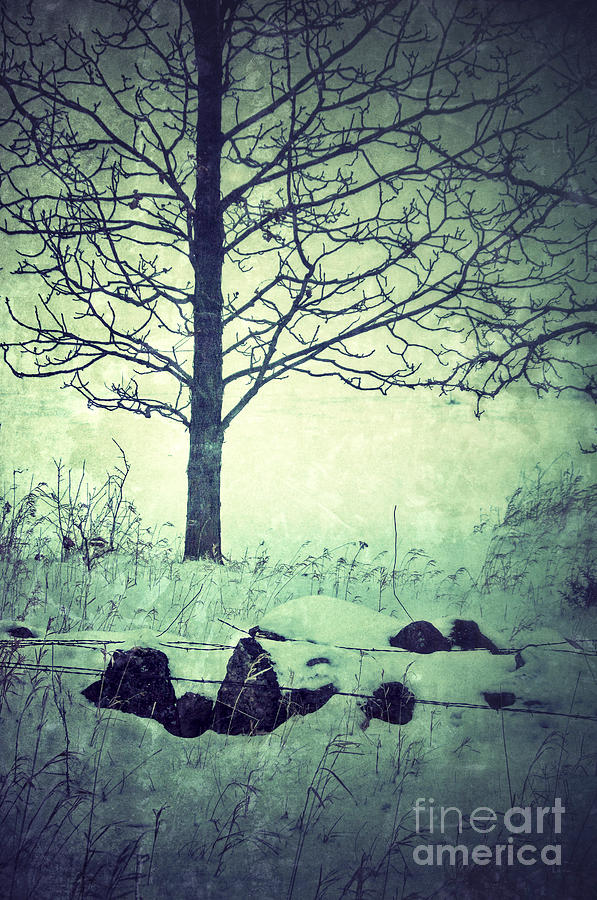Tree And Fence In The Fog And Snow Photograph  - Tree And Fence In The Fog And Snow Fine Art Print