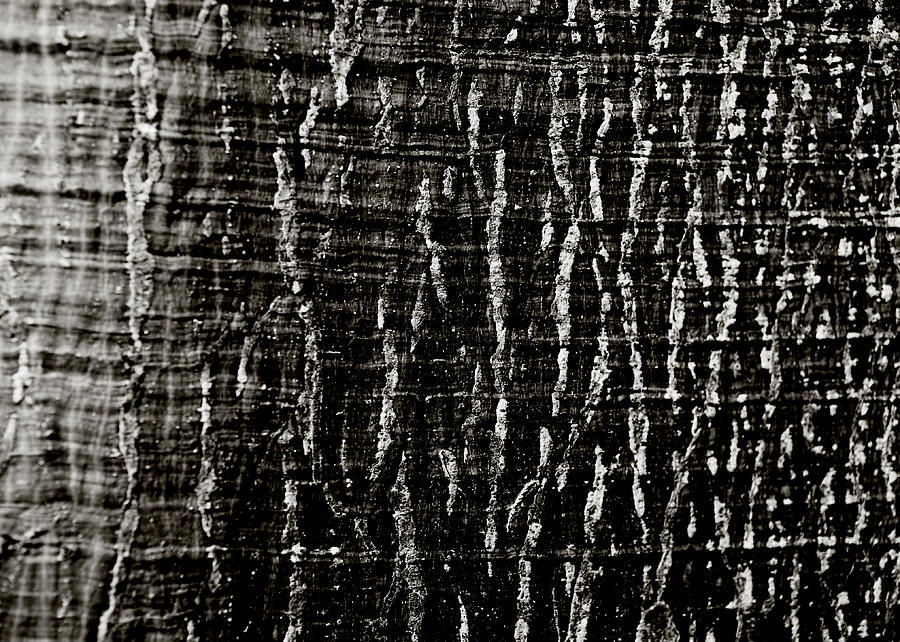 Tree Bark Photograph