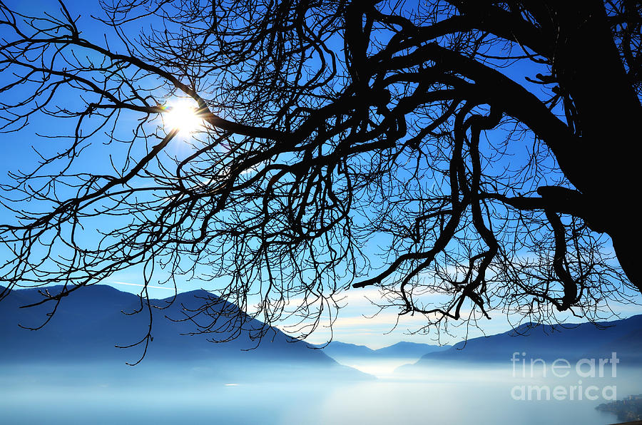 Tree Branches And Sun Photograph