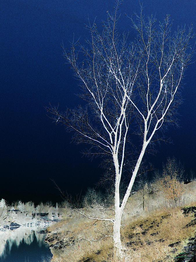 Tree By Stream I Photograph