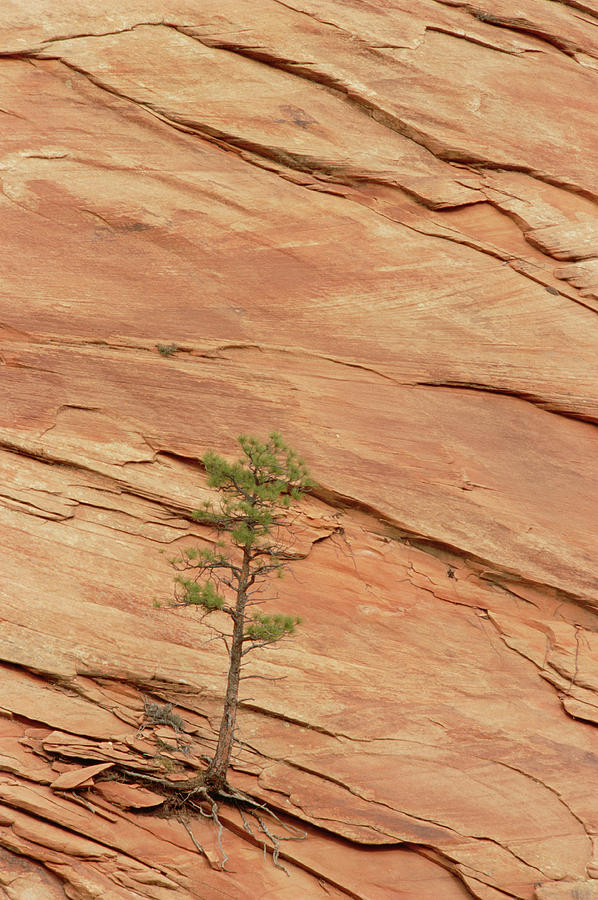 Tree Clinging To Sandstone Formation Photograph