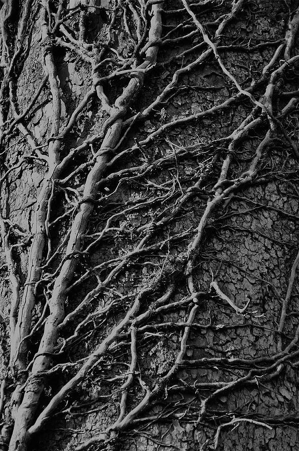 Tree Detail Photograph  - Tree Detail Fine Art Print