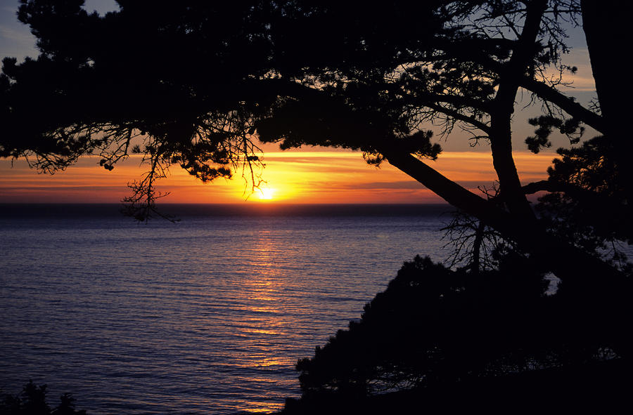 Tree Framing Seascape Sunset Photograph