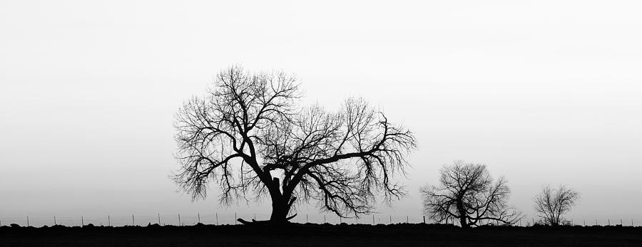 Tree Harmony Black And White Photograph