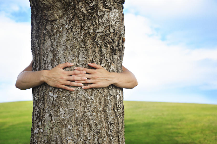 Tree Hugger 2 Photograph  - Tree Hugger 2 Fine Art Print