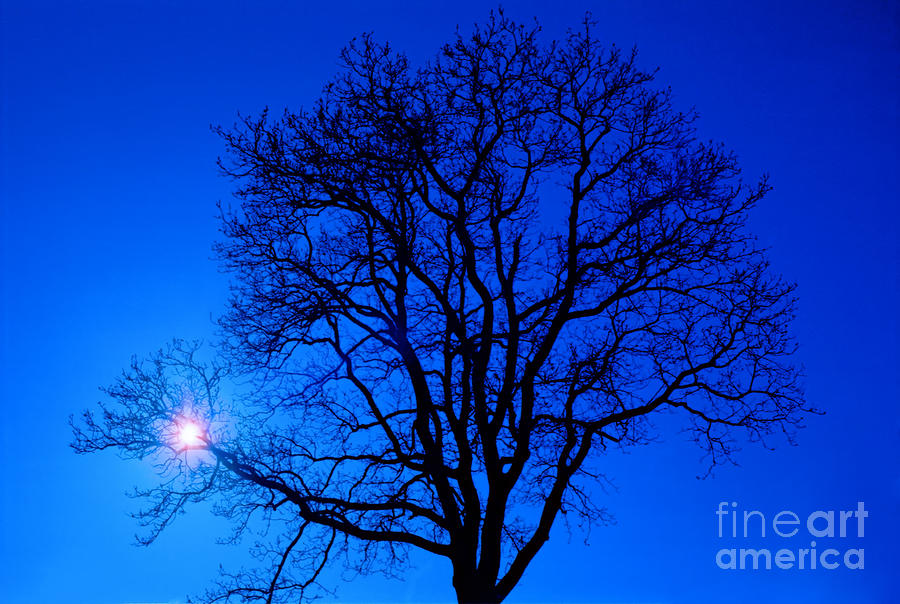 Tree In Blue Sky Photograph