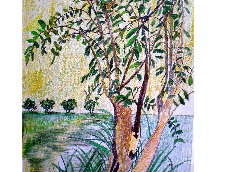 Tree In The Landscape Drawing  - Tree In The Landscape Fine Art Print