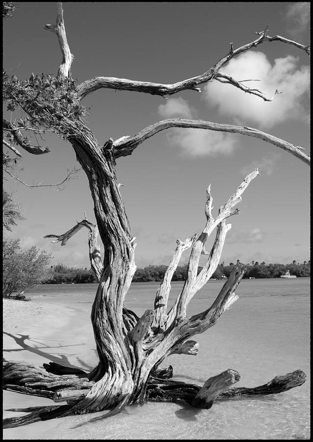 Tree In Tobago Photograph  - Tree In Tobago Fine Art Print