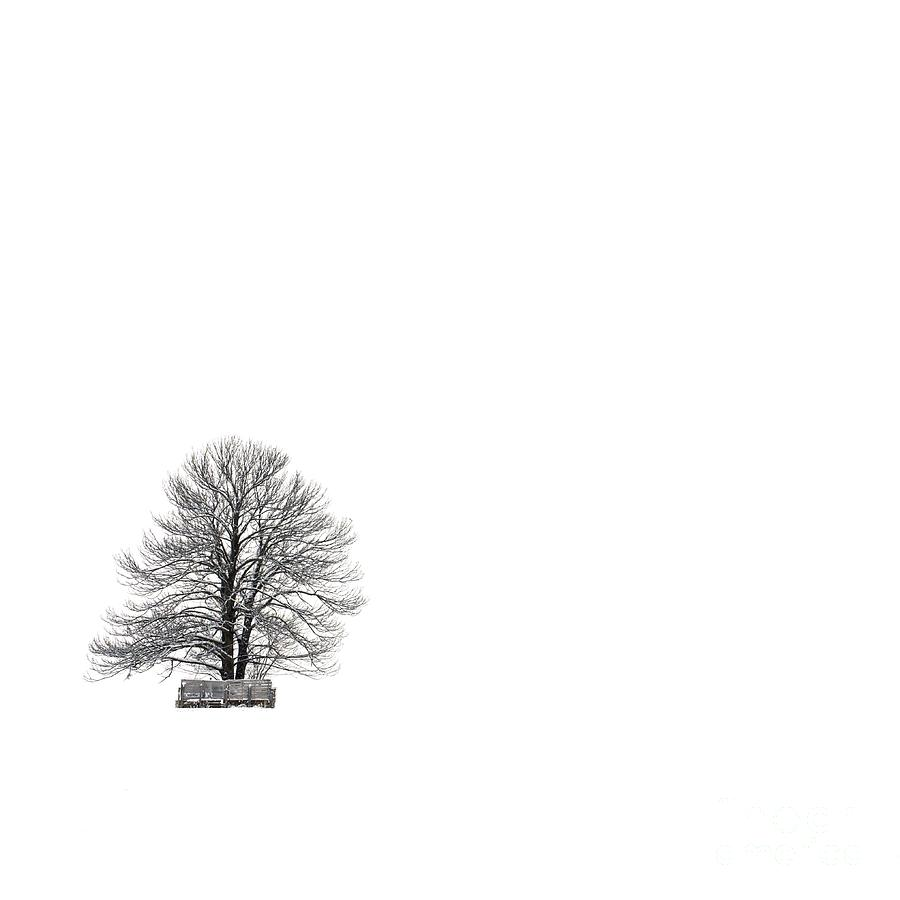 Tree Isolated Under The Snow In The Middle Field In Winter. Photograph