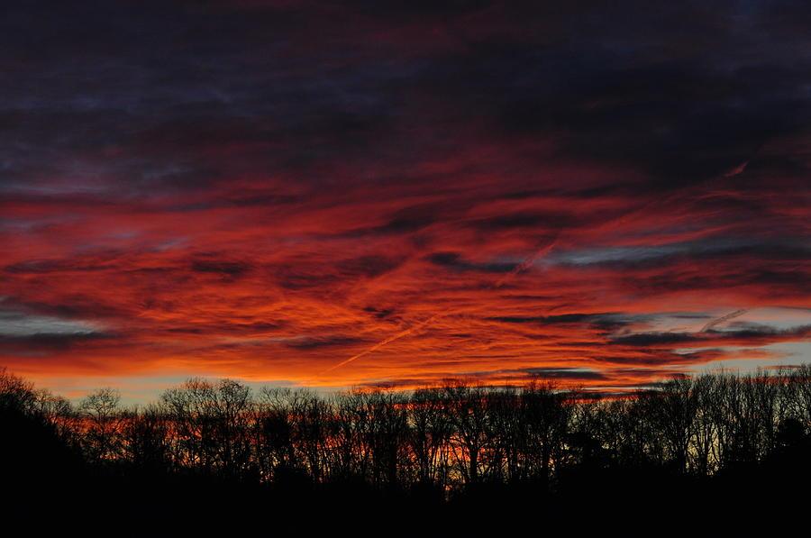 Tree Line Sunset Photograph