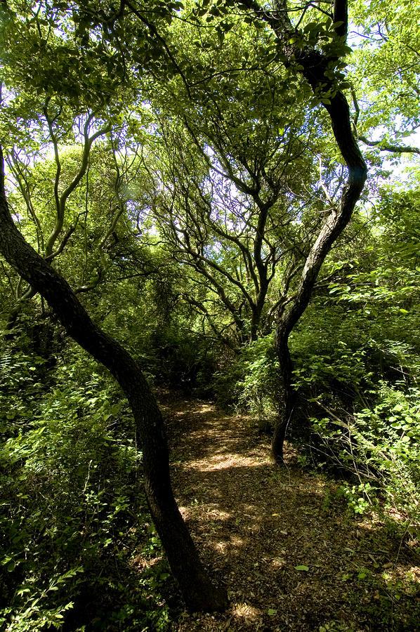 Tree lined path paintings reanimators