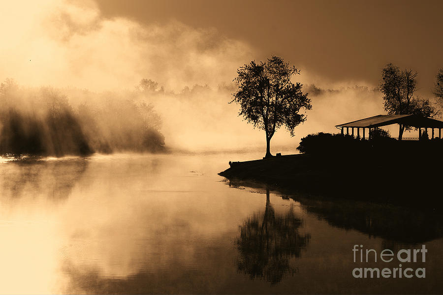 Tree Midst The Fog- Sepia Photograph