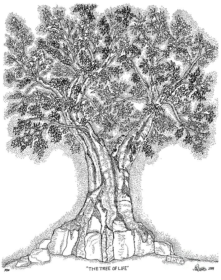 Tree Of Life 1 Drawing  - Tree Of Life 1 Fine Art Print