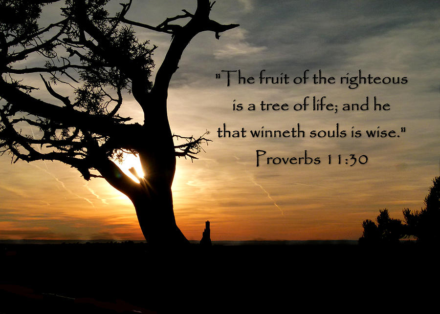 Tree Of Life Of Proverbs 11 Photograph - Tree Of Life Of Proverbs 11 ...