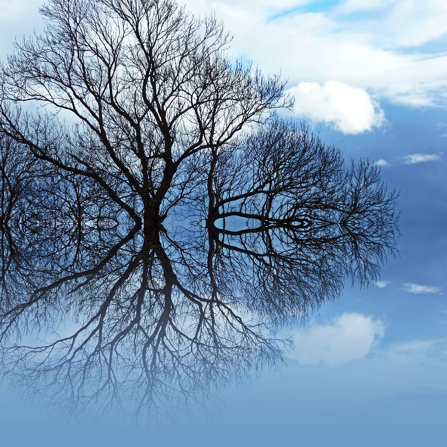 Tree Of Life Digital Art