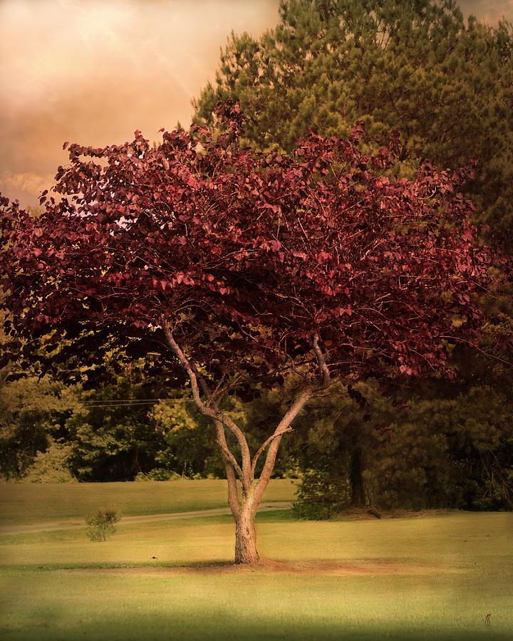 Autumn Photograph - Tree Of Love by Jai Johnson
