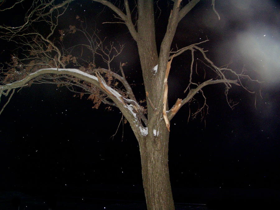 Tree On A Dark Snowy Night Photograph