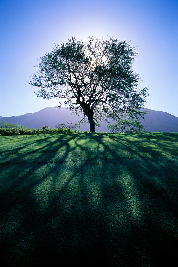 Tree On Grassy Knoll Photograph